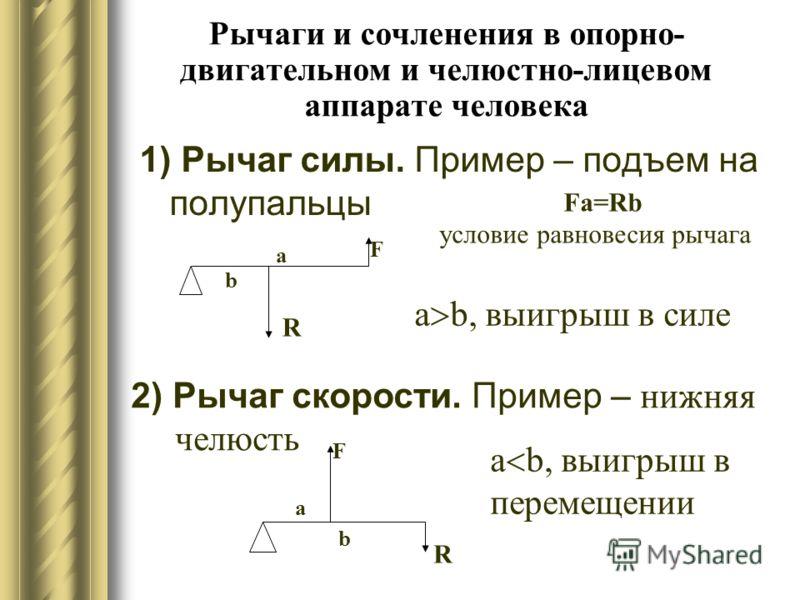 Рычаги и сочленения в опорно- двигательном и челюстно-лицевом аппарате человека 1) Рычаг силы. Пример – подъем на полупальцы b a R F a b, выигрыш в силе 2) Рычаг скорости. Пример – н ижняя челюсть a b, выигрыш в перемещении b a R F Fa=Rb условие равн