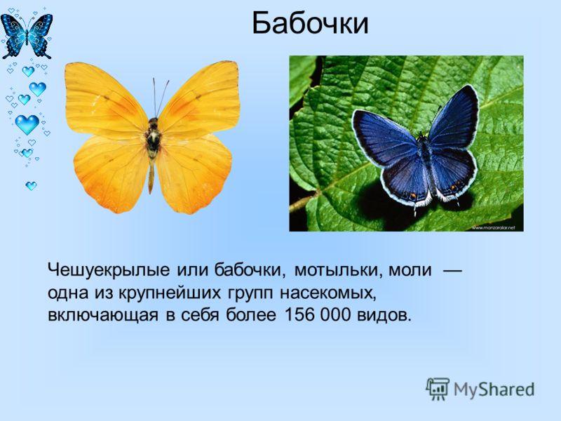 Презентацию на тему бабочки