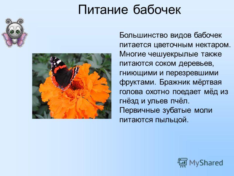Питание бабочек Большинство видов бабочек питается цветочным нектаром. Многие чешуекрылые также питаются соком деревьев, гниющими и перезревшими фруктами. Бражник мёртвая голова охотно поедает мёд из гнёзд и ульев пчёл. Первичные зубатые моли питаютс