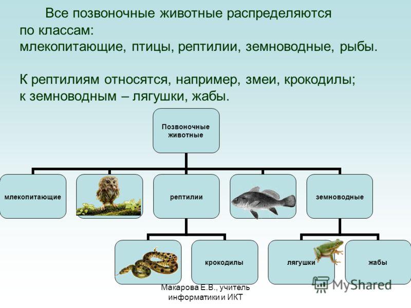 Макарова Е.В., учитель информатики и ИКТ Все позвоночные животные распределяются по классам: млекопитающие, птицы, рептилии, земноводные, рыбы. К рептилиям относятся, например, змеи, крокодилы; к земноводным – лягушки, жабы.