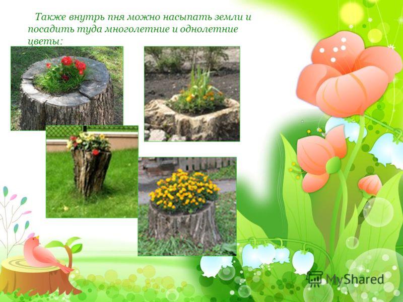 Также внутрь пня можно насыпать земли и посадить туда многолетние и однолетние цветы: