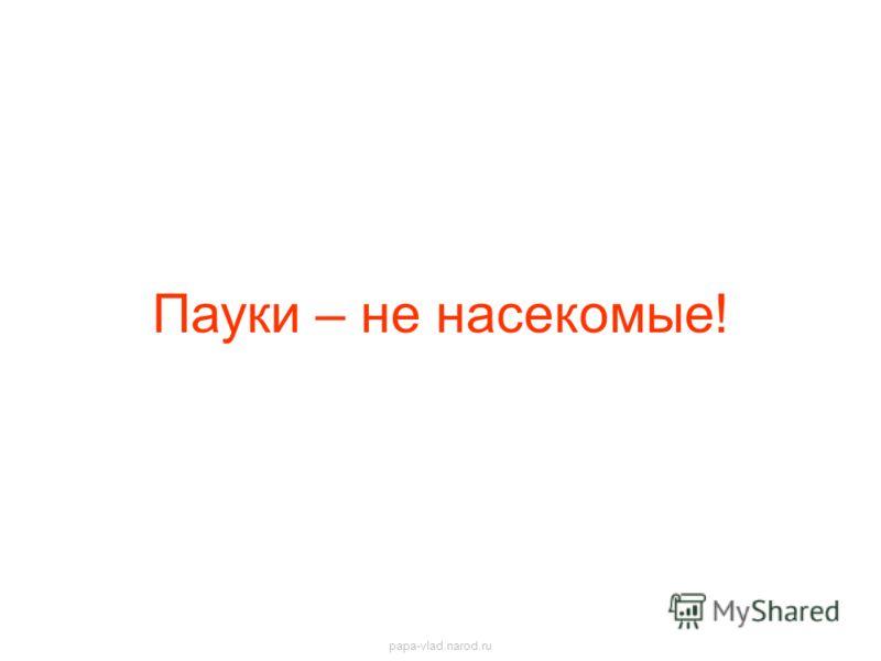 Пауки – не насекомые! papa-vlad.narod.ru