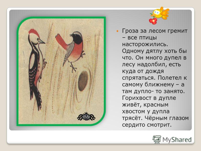 Гроза за лесом гремит – все птицы насторожились. Одному дятлу хоть бы что. Он много дупел в лесу надолбил, есть куда от дождя спрятаться. Полетел к самому ближнему – а там дупло- то занято. Горихвост в дупле живёт, красным хвостом у дупла трясёт. Чёр