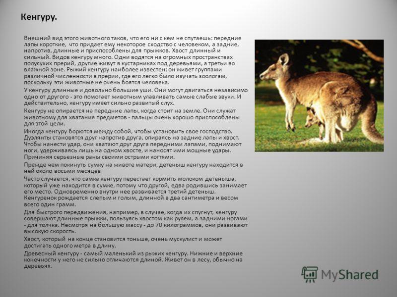 животный мир Австралии уникален, но полностью лишен обезьян, толстокожих млекопитающих и жвачных животных.