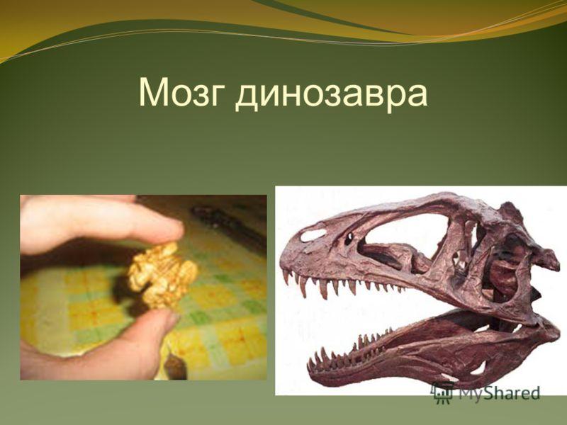 Мозг динозавра