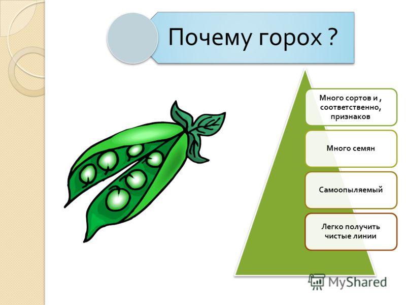 Почему горох ? Много сортов и, соответственно, признаков Много семян Самоопыляемый Легко получить чистые линии