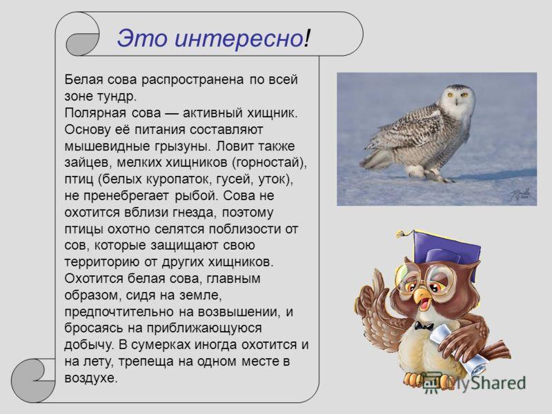 Белая сова распространена по всей зоне тундр. Полярная сова активный хищник. Основу её питания составляют мышевидные грызуны. Ловит также зайцев, мелких хищников (горностай), птиц (белых куропаток, гусей, уток), не пренебрегает рыбой. Сова не охотитс