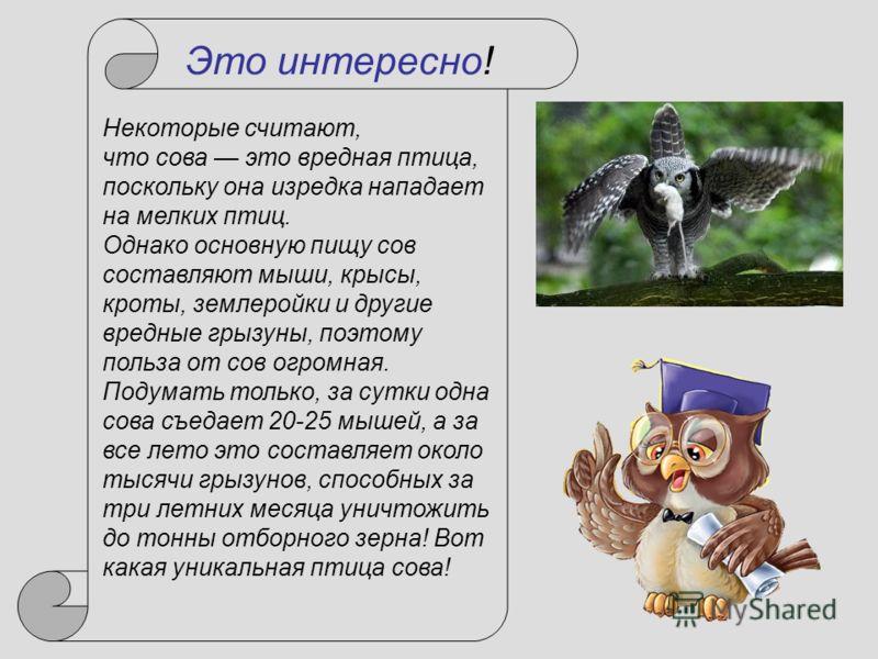 Некоторые считают, что сова это вредная птица, поскольку она изредка нападает на мелких птиц. Однако основную пищу сов составляют мыши, крысы, кроты, землеройки и другие вредные грызуны, поэтому польза от сов огромная. Подумать только, за сутки одна