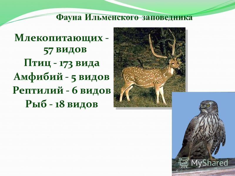 Млекопитающих - 57 видов Птиц - 173 вида Амфибий - 5 видов Рептилий - 6 видов Рыб - 18 видов Фауна Ильменского заповедника