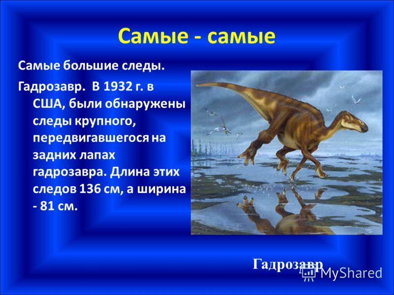 Самые - самые Самые большие следы. Гадрозавр. В 1932 г. в США, были обнаружены следы крупного, передвигавшегося на задних лапах гадрозавра. Длина этих следов 136 см, а ширина - 81 см. Гадрозавр