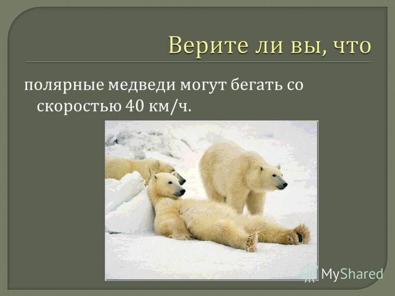 полярные медведи могут бегать со скоростью 40 км / ч.
