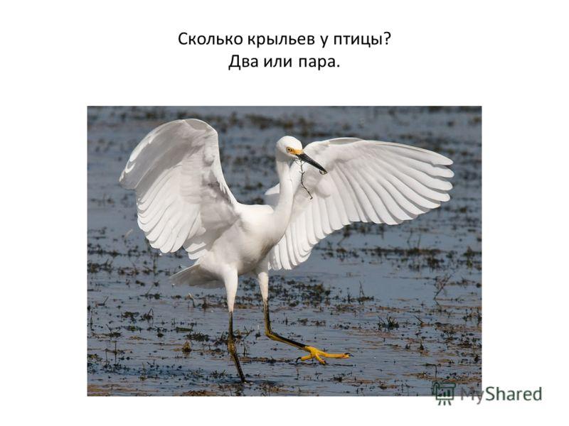Сколько крыльев у птицы? Два или пара.