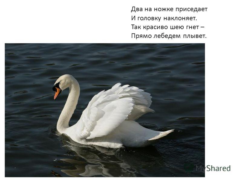 Два на ножке приседает И головку наклоняет. Так красиво шею гнет – Прямо лебедем плывет.