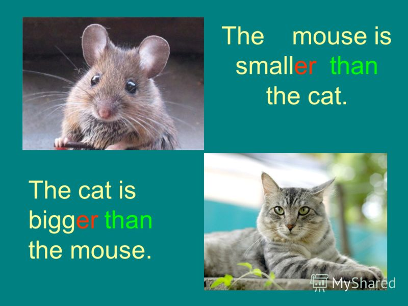 The mouse is smaller than the cat. The cat is bigger than the mouse.