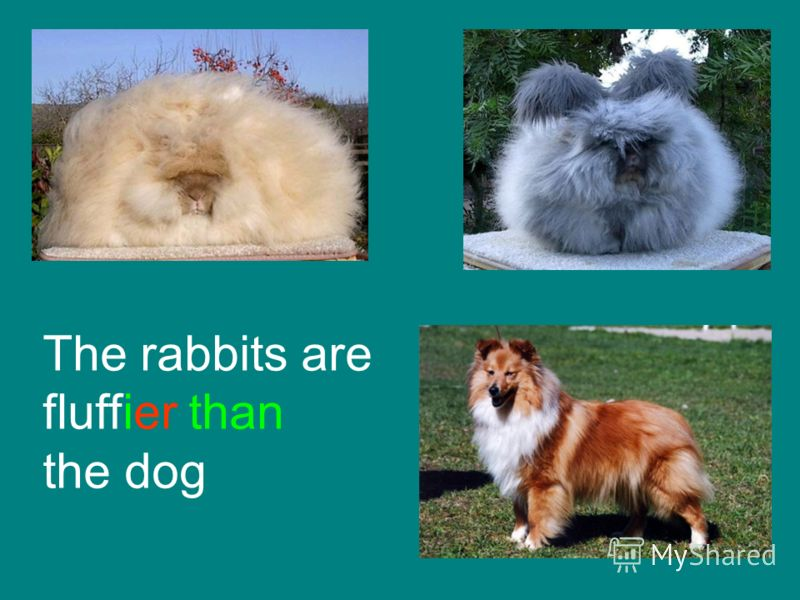 The rabbits are fluffier than the dog