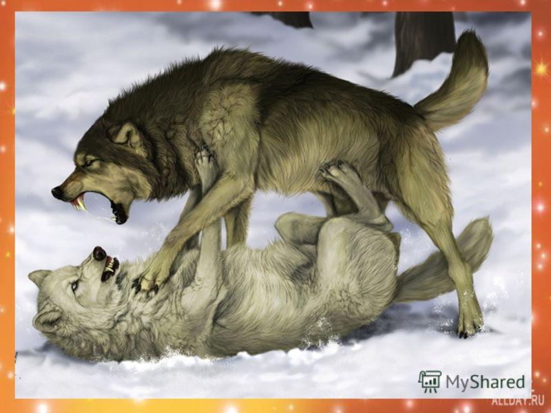 Притча о Добре и Зле Когда-то давно старый индеец открыл своему внуку жизненную истину: - В каждом человеке идет борьба, очень похожая на борьбу двух волков. Один волк представляет зло – зависть, ревность, эгоизм, амбиции, ложь… Другой волк представл