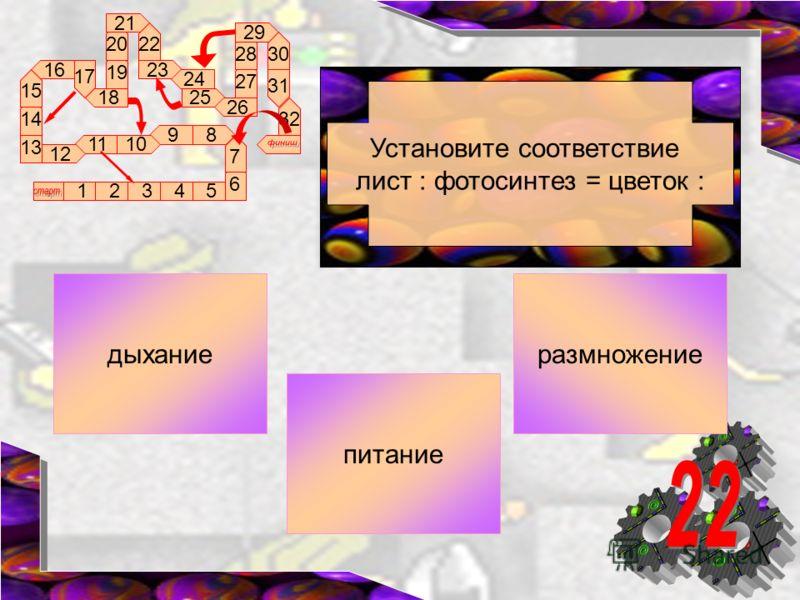 89 1011 12 16 17 18 13 12345 14 15 6 7 19 20 21 22 23 24 25 26 27 28 29 30 31 32 Установите соответствие лист : фотосинтез = цветок : размножениедыхание питание