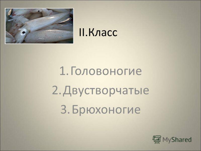 II.Класс 1.Головоногие 2.Двустворчатые 3.Брюхоногие