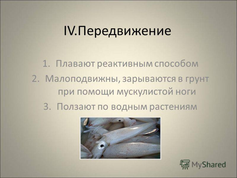 IV.Передвижение 1.Плавают реактивным способом 2.Малоподвижны, зарываются в грунт при помощи мускулистой ноги 3.Ползают по водным растениям