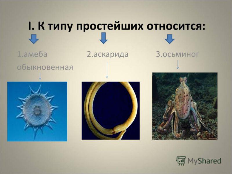 I. К типу простейших относится: 1.амеба 2.аскарида 3.осьминог обыкновенная