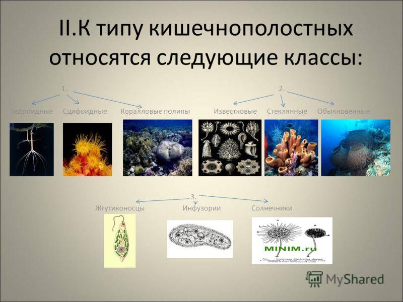 черви в жизни человека
