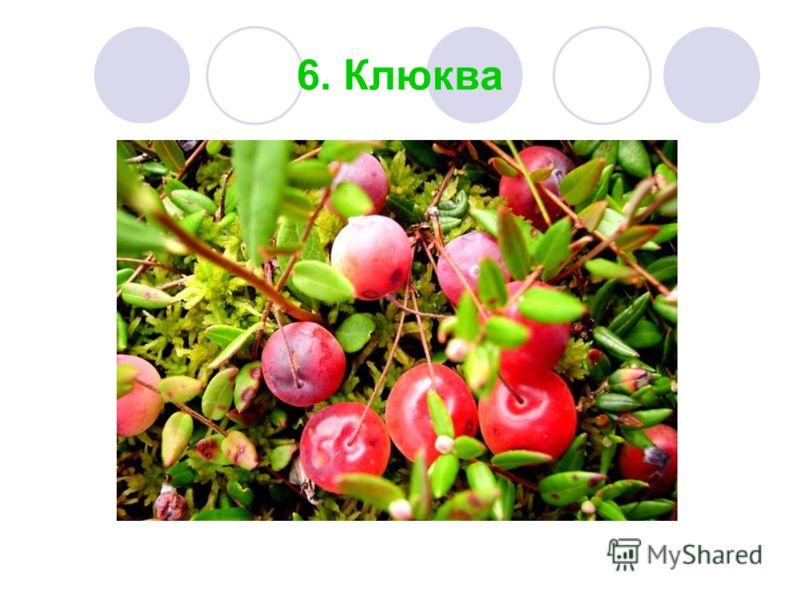 6. Клюква