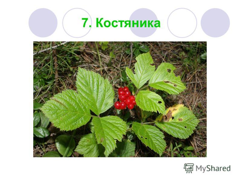 7. Костяника