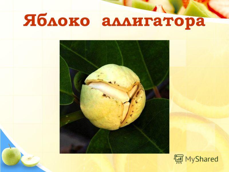 Яблоко аллигатора