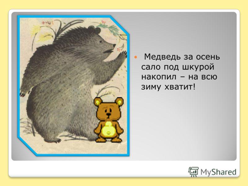 Медведь за осень сало под шкурой накопил – на всю зиму хватит!