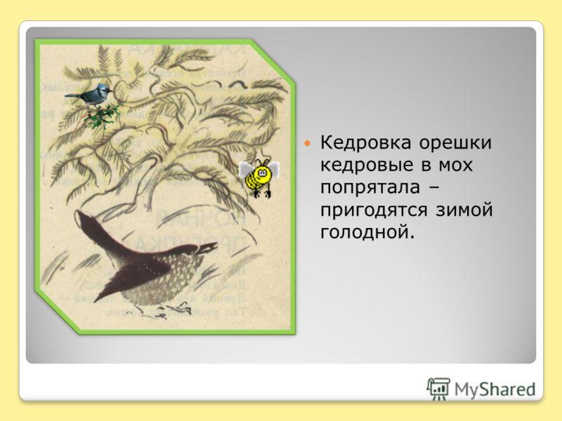 Кедровка орешки кедровые в мох попрятала – пригодятся зимой голодной.