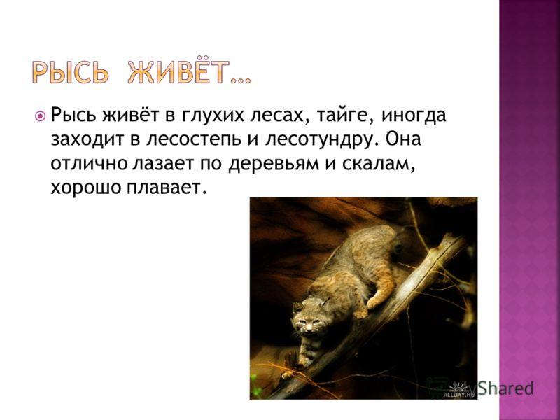 Рысь живёт в глухих лесах, тайге, иногда заходит в лесостепь и лесотундру. Она отлично лазает по деревьям и скалам, хорошо плавает.