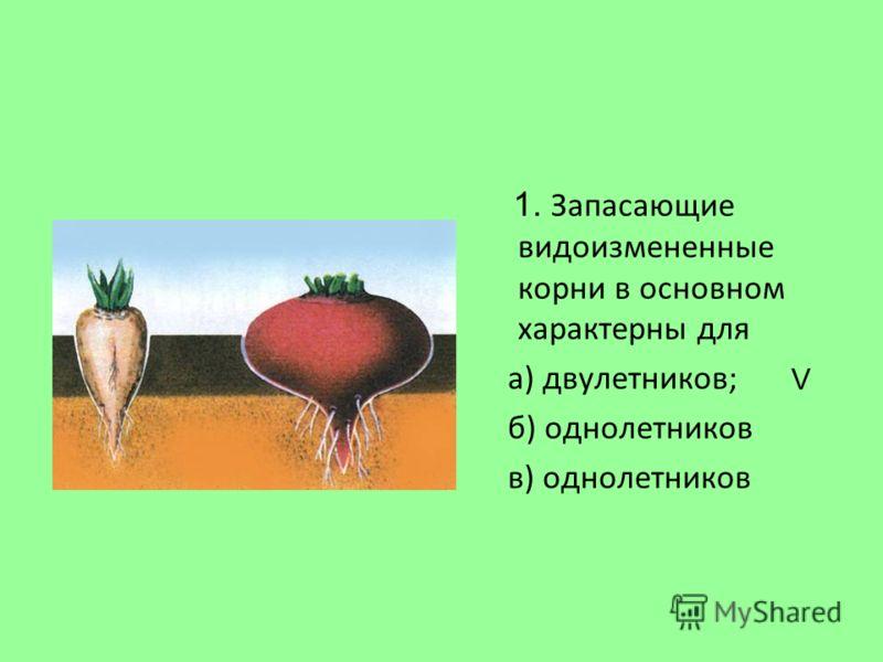 1. Запасающие видоизмененные корни в основном характерны для а) двулетников; б) однолетников в) однолетников V
