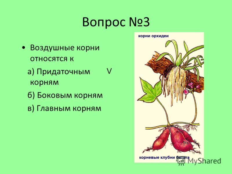 Вопрос 3 Воздушные корни относятся к а) Придаточным корням б) Боковым корням в) Главным корням V