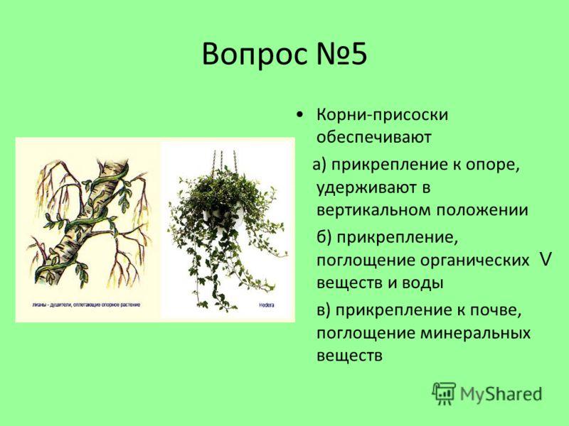 Вопрос 5 Корни-присоски обеспечивают а) прикрепление к опоре, удерживают в вертикальном положении б) прикрепление, поглощение органических веществ и воды в) прикрепление к почве, поглощение минеральных веществ V