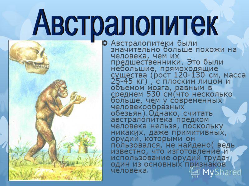 Австралопитеки были значительно больше похожи на человека, чем их предшественники. Это были небольшие, прямоходящие существа (рост 120-130 см, масса 25-45 кг), с плоским лицом и объемом мозга, равным в среднем 530 см(что несколько больше, чем у совре