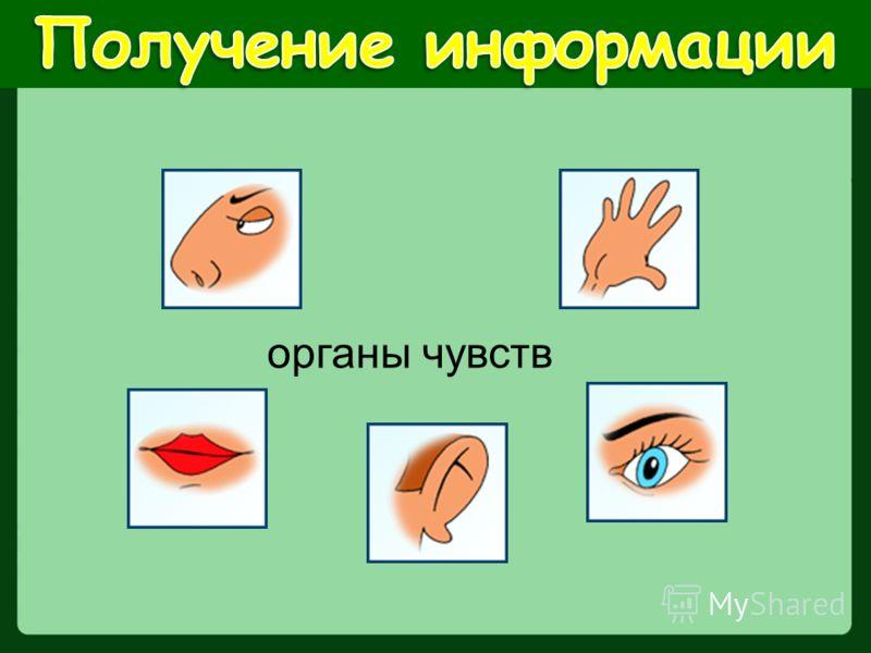 органы чувств