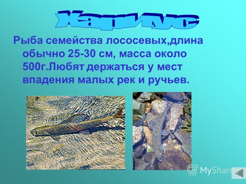 Рыба семейства лососевых,длина обычно 25-30 см, масса около 500г.Любят держаться у мест впадения малых рек и ручьев.