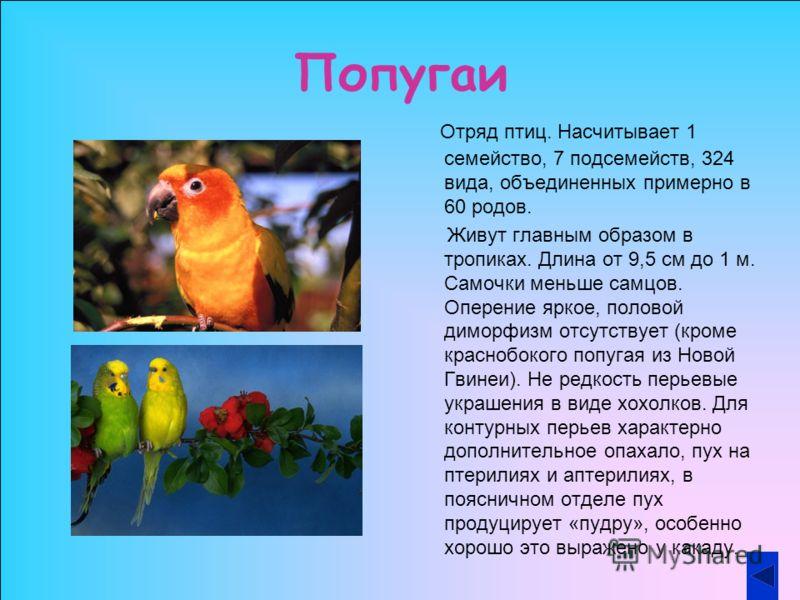 Попугаи Отряд птиц. Насчитывает 1 семейство, 7 подсемейств, 324 вида, объединенных примерно в 60 родов. Живут главным образом в тропиках. Длина от 9,5 см до 1 м. Самочки меньше самцов. Оперение яркое, половой диморфизм отсутствует (кроме краснобокого