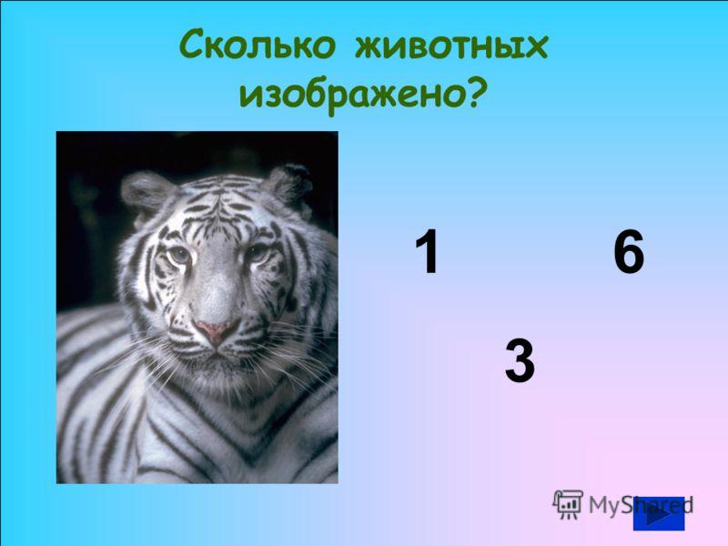 Сколько животных изображено? 61 3