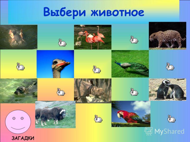 Выбери животное ЗАГАДКИ