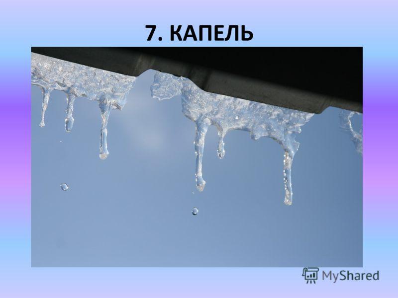 7. КАПЕЛЬ