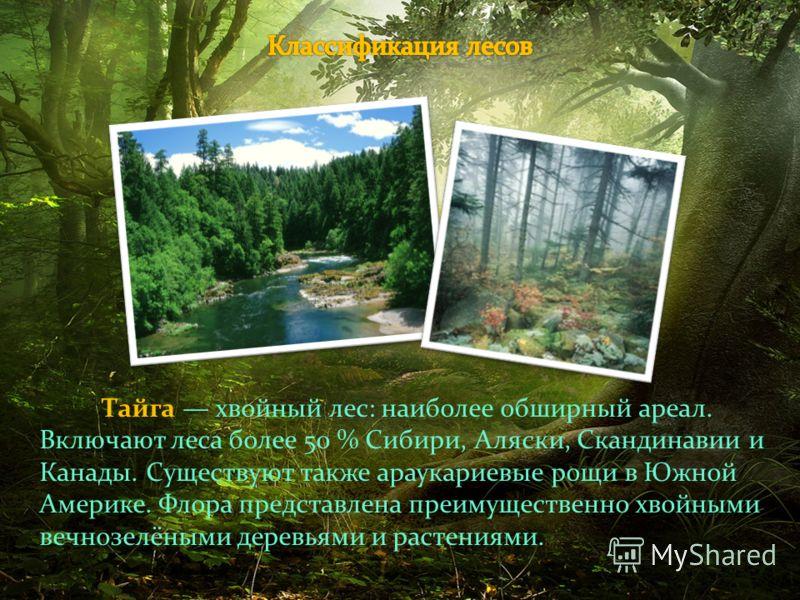 Тайга хвойный лес: наиболее обширный ареал. Включают леса более 50 % Сибири, Аляски, Скандинавии и Канады. Существуют также араукариевые рощи в Южной Америке. Флора представлена преимущественно хвойными вечнозелёными деревьями и растениями.