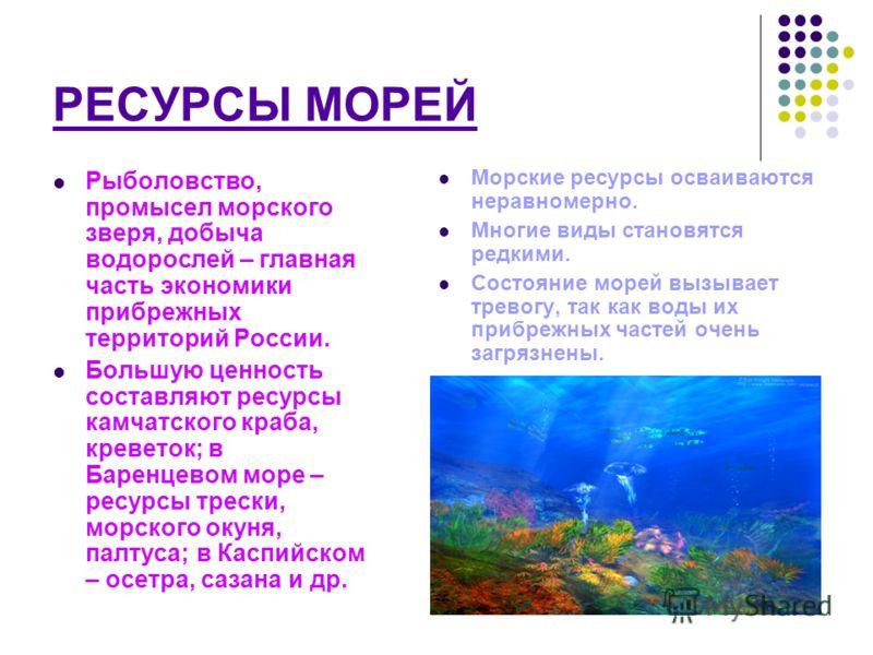 РЕСУРСЫ МОРЕЙ Рыболовство, промысел морского зверя, добыча водорослей – главная часть экономики прибрежных территорий России. Большую ценность составляют ресурсы камчатского краба, креветок; в Баренцевом море – ресурсы трески, морского окуня, палтуса