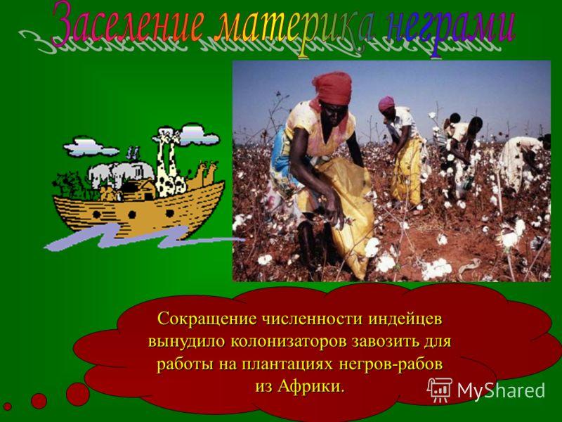 Сокращение численности индейцев вынудило колонизаторов завозить для работы на плантациях негров-рабов из Африки.