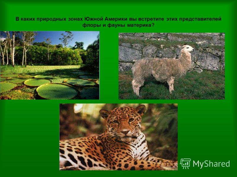 В каких природных зонах Южной Америки вы встретите этих представителей флоры и фауны материка?