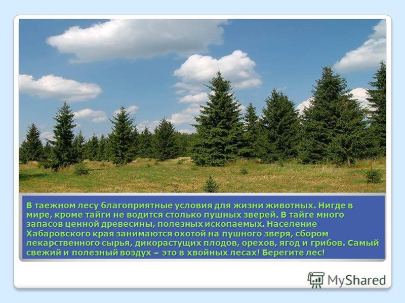 В таежном лесу благоприятные условия для жизни животных. Нигде в мире, кроме тайги не водится столько пушных зверей. В тайге много запасов ценной древесины, полезных ископаемых. Население Хабаровского края занимаются охотой на пушного зверя, сбором л