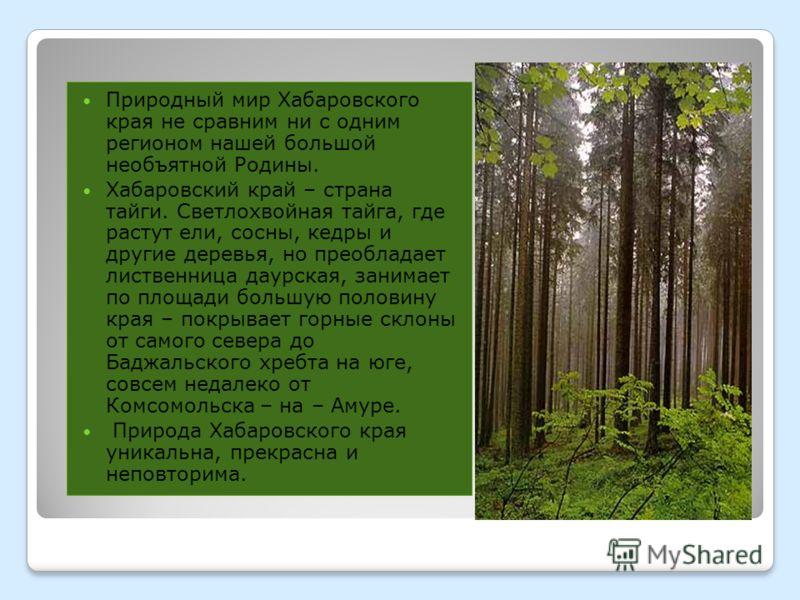 Природный мир Хабаровского края не сравним ни с одним регионом нашей большой необъятной Родины. Хабаровский край – страна тайги. Светлохвойная тайга, где растут ели, сосны, кедры и другие деревья, но преобладает лиственница даурская, занимает по площ