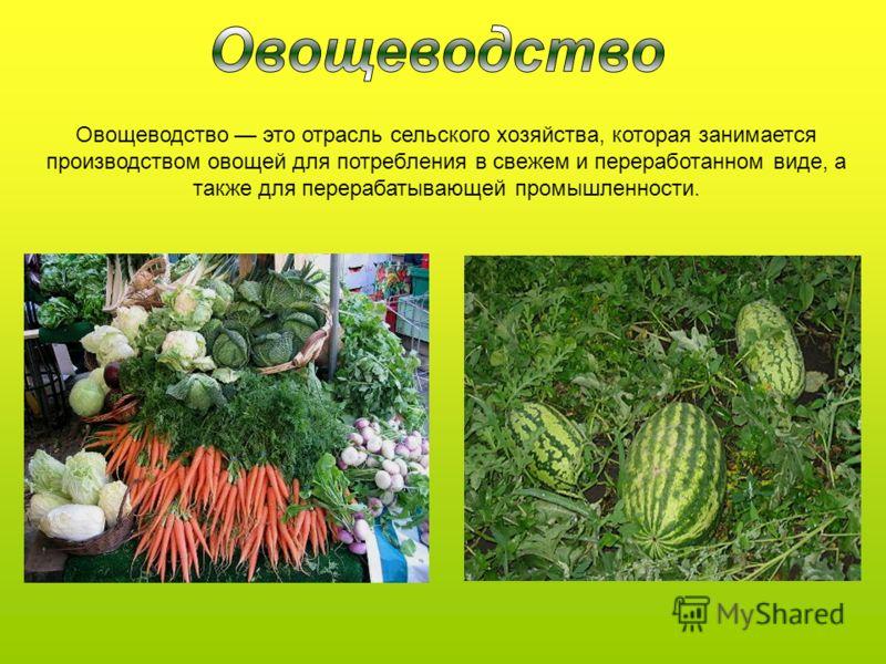 Овощеводство это отрасль сельского хозяйства, которая занимается производством овощей для потребления в свежем и переработанном виде, а также для перерабатывающей промышленности.