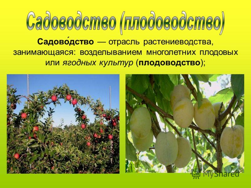 Садово́дство отрасль растениеводства, занимающаяся: возделыванием многолетних плодовых или ягодных культур (плодоводство);
