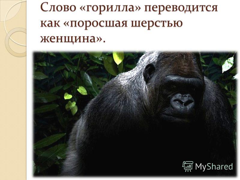 Слово «горилла» переводится как «поросшая шерстью женщина».